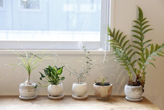 鉢植え虫対策